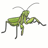 かまきりのイラスト・絵カード素材 秋の虫のイラスト