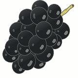 ぶどう(黒)のイラスト・絵カード素材|秋の果物のイラスト