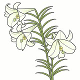 ゆりのイラスト・絵カード素材 夏の花のイラスト