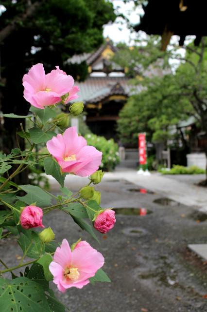 myoryujifuyo170817