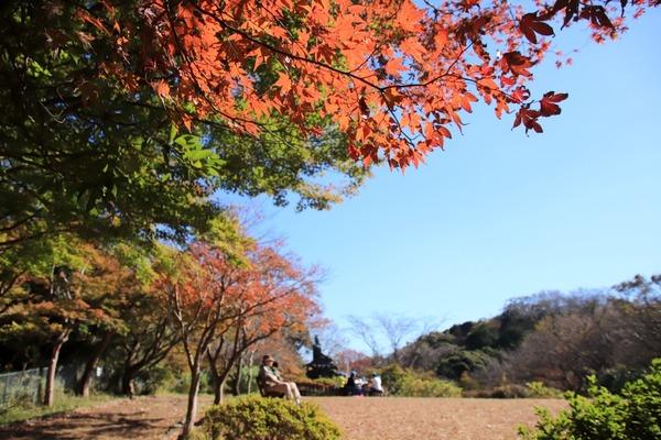 s_genjiyamakoyo181115-7