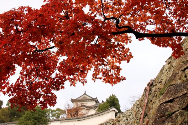 s_himejijo181204-12