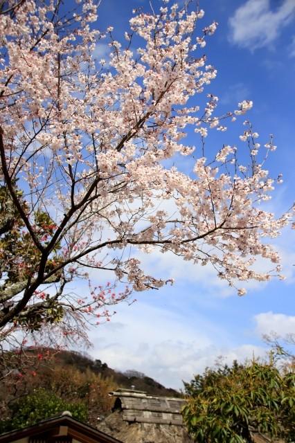 s_tokeijihiganzakura180318-3