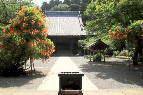 s_m-nozenkazura180703