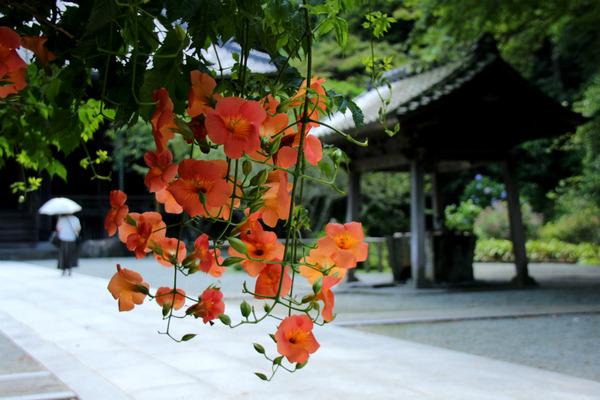 myohonjinozenkazura170710-4