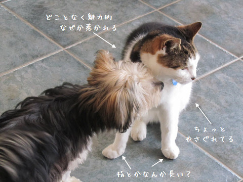 mimi shiogao3