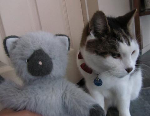tokyo kitty2