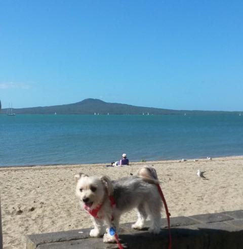 Beach blue1