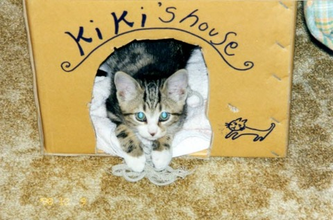 kiki as kitten2