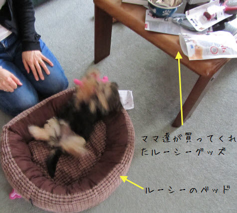 lucy uchinoko1