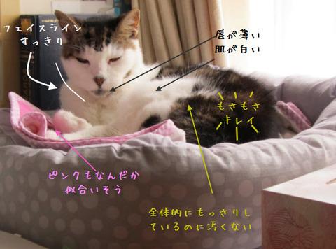 mimi shiogao1-1