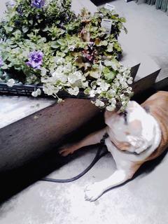 草花とむーすけ