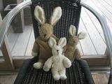rabbit001