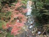 髙橋 渓流と紅葉~魚釣りたぁい~