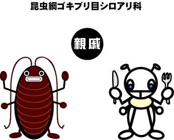 shiroari_5