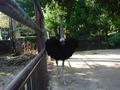 鳥類センター_5