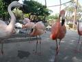 鳥類センター_4
