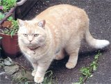 このネコを探しています。