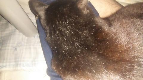 やべえ俺の膝上に猫ちゃん乗ってくれたwwwwwwwwwwwwwwww