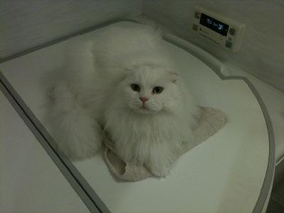 k-cat