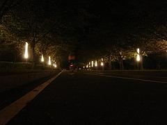 0911:Night Run Bicycle 2