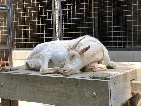 夢見が崎動物公園 62_180602_0018
