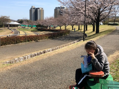 みいさんと桜並木