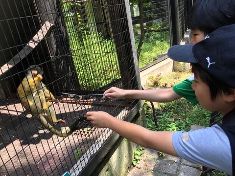 夢見が崎動物公園 62_180602_0065