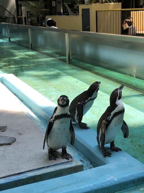 夢見が崎動物公園 62_180602_0029