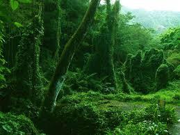 manoa-green