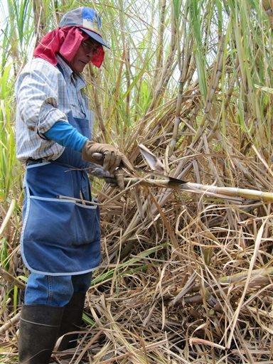 ap-ap-explains-why-hawaiis-sugar-plantations-have-disappeared