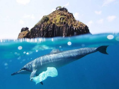 dolphin-with-plastic-bag