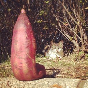 芋、子猫に呼び出される。