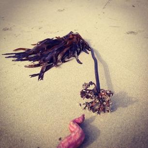 芋と海藻。その2