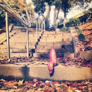 芋、階段で休憩。