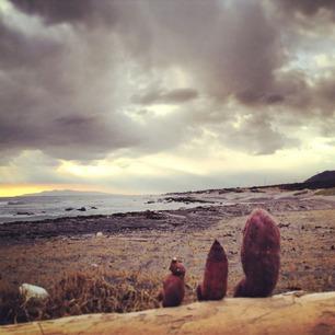芋、大島を眺める。