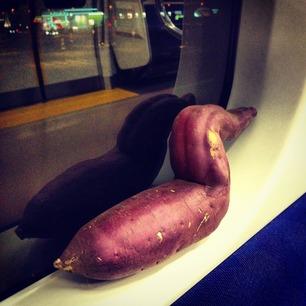 芋、電車でくつろぎすぎる。