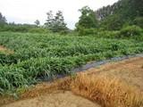 草刈前(1)
