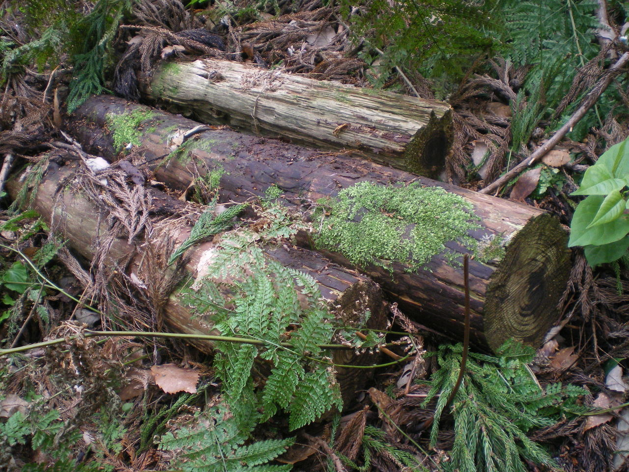 ・・・すると、倒木の下に、細長い謎の生き物が!一瞬、「ウゲゲゲッ、巨大な... イモリブログ(イ