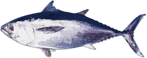 main_fish
