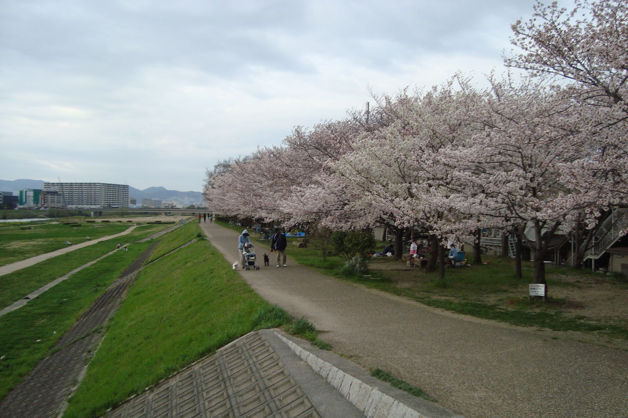 伊丹市の桜名所においでやす : 喜びも悲しみも