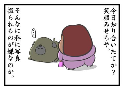 41501159
