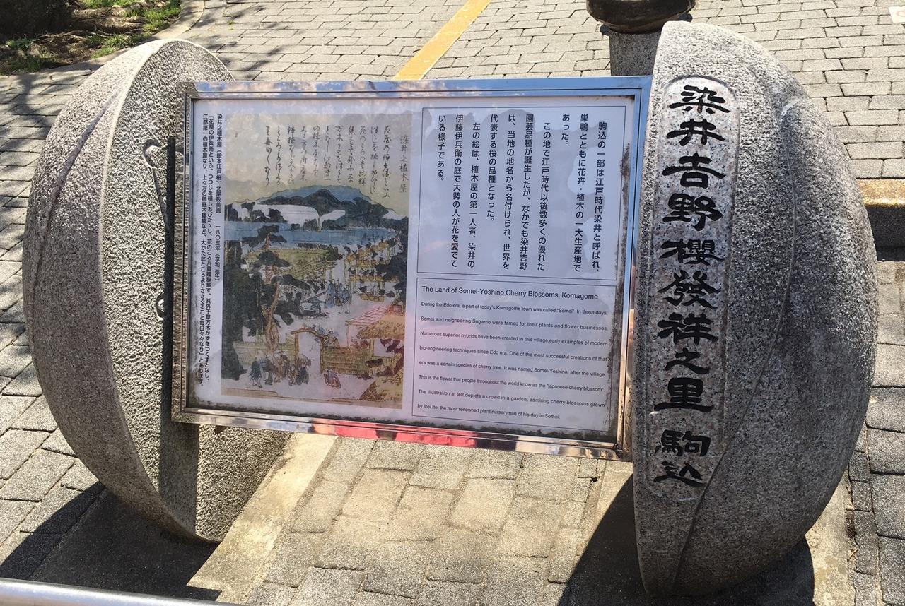 染井吉野桜発祥の碑