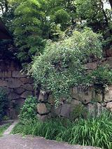 ishigaki1002