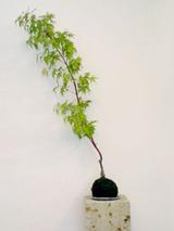 vase02 .jpg