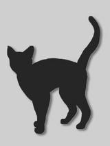 cat8902.jpg