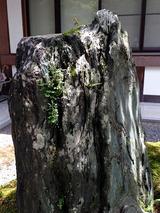 kokeishi003