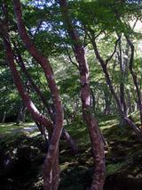 kyoukoku92702.jpg