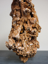 coral062103