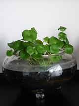 watergarden001